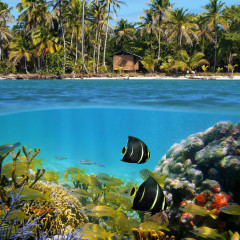 Beach and underwater view with a colorful coral reef, shoal of tropical fish, coconut palm trees and a hut