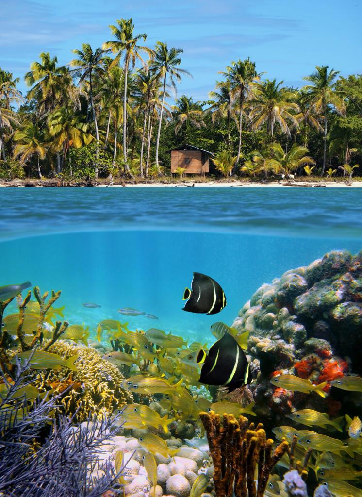 Sealife and tropical beach